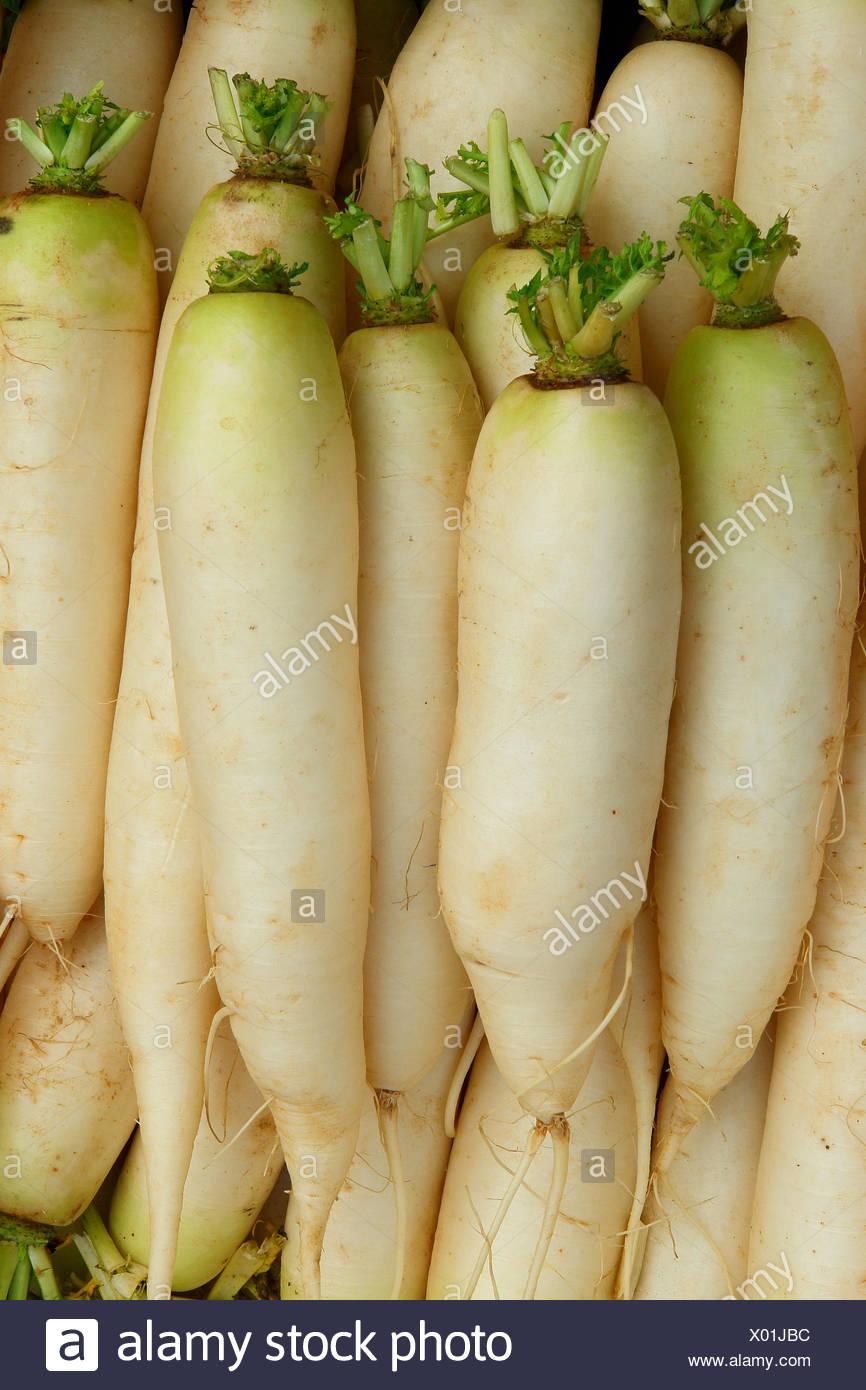 Daikon - Japanese radish - Stock Image