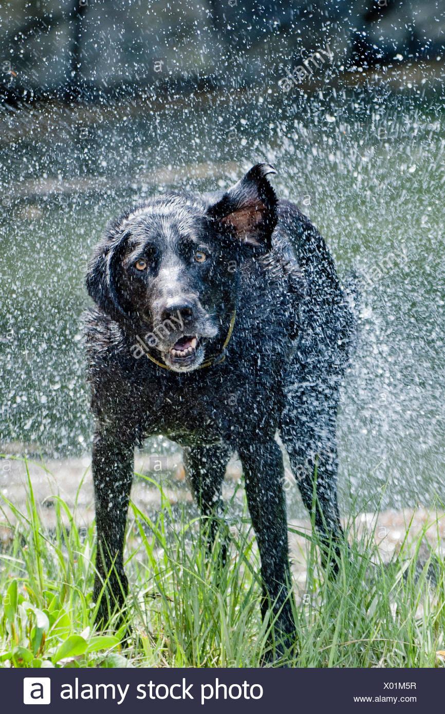 Dog drying off Stock Photo