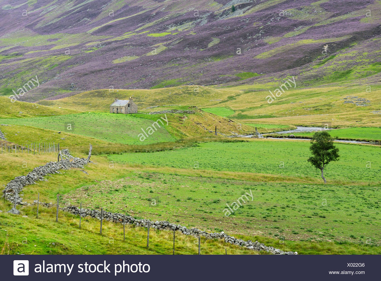 Meadow landscape of the Grampian Mountains, Scotland, Great Britain, Europe - Stock Image