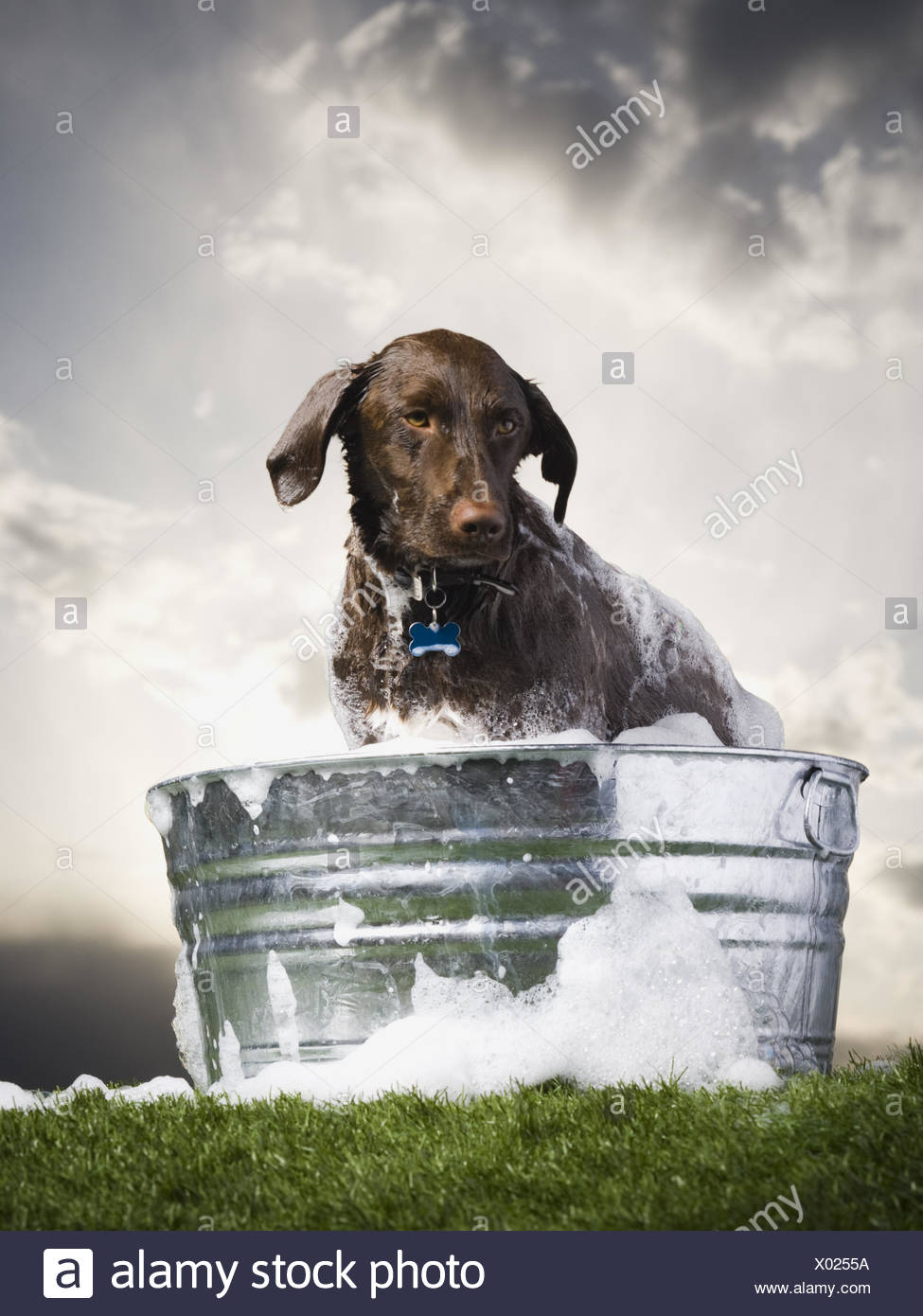 Dog in wash basin with suds outdoors on cloudy day - Stock Image