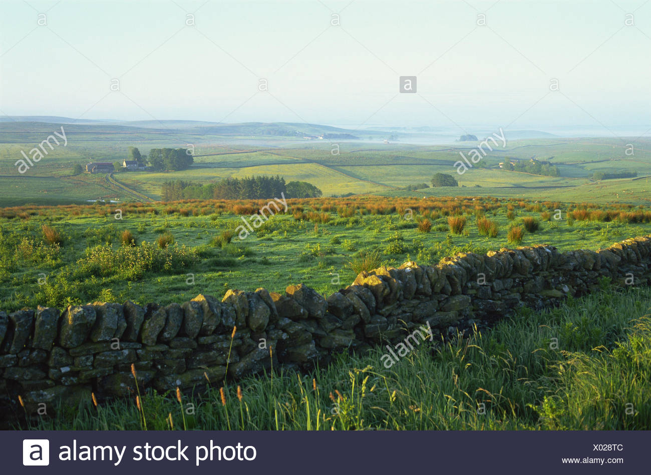 Great Britain, England, Northumbria, scenery, fog, stone defensive wall, morning light, Europe, Northumberland, width, distance, view, meadows, fields, hills, foggy, morning, atmospheric, deserted, meadows, plants, defensive wall, - Stock Image