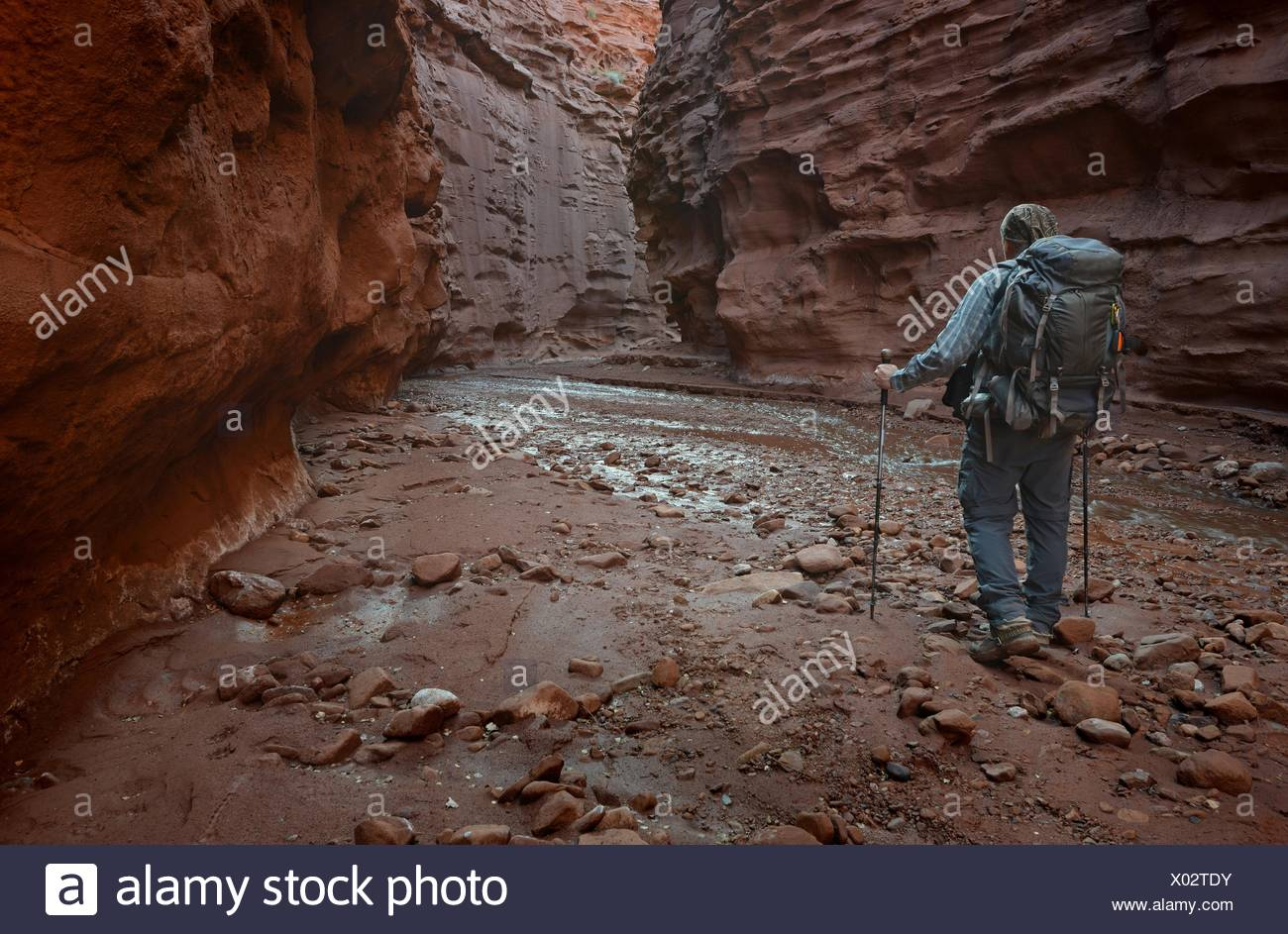 USA, Utah, Moab, Hiker in Professor Creek Narrows - Stock Image