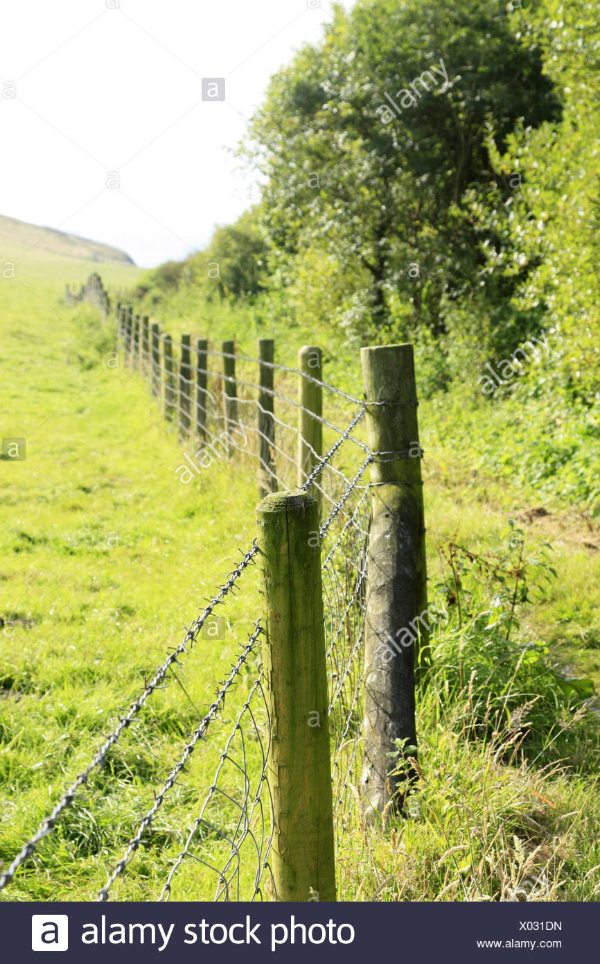 Hill scenery, barbed wire fence, summer, scenery, edge the forest, meadow, pasture, fenced in, fence, pasture fence, barbed wire, enclosure, enclosure, protection, security, agriculture, outside, - Stock Image
