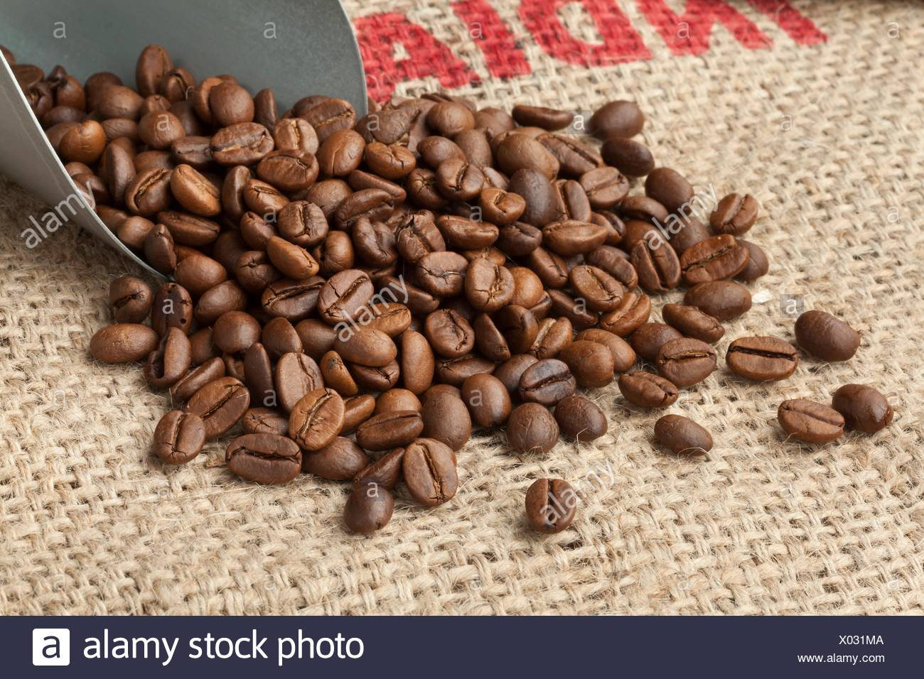 Roasted Malabar coffee beans from India on a jute bag. - Stock Image