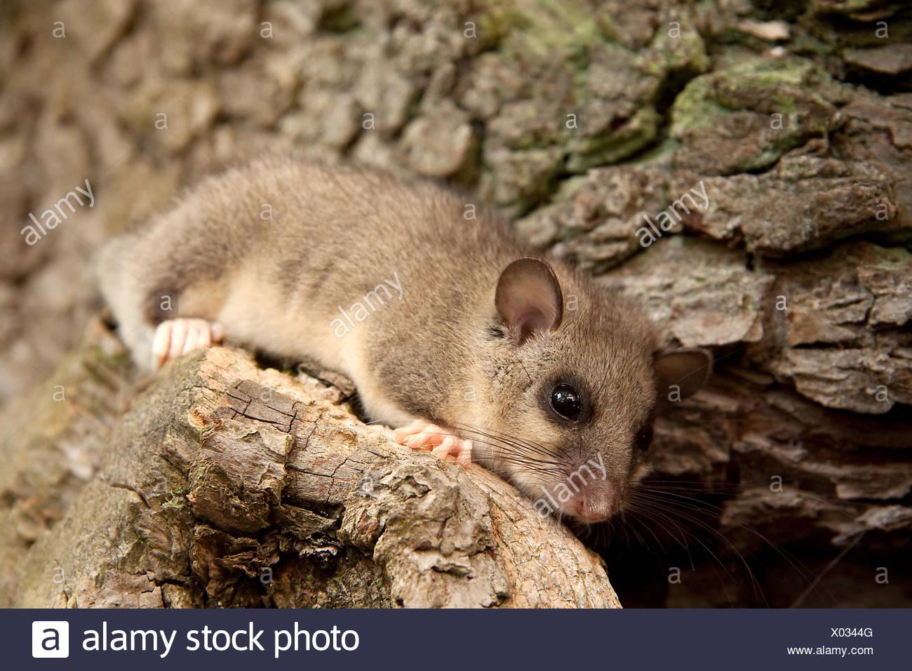 tree animals cub - Stock Image