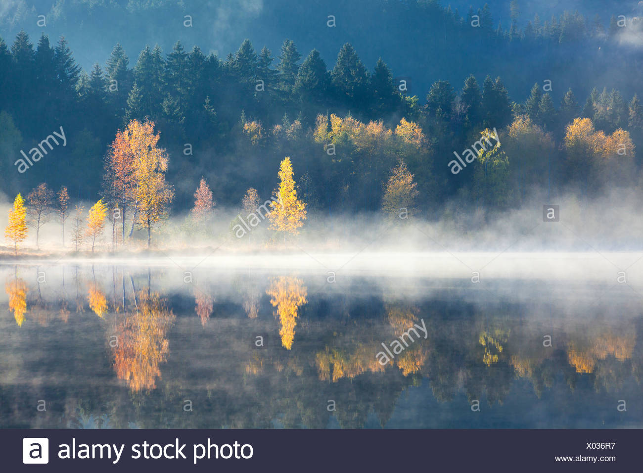Schwarzsee and spruce forest, Tyrol, Austria, Europe - Stock Image