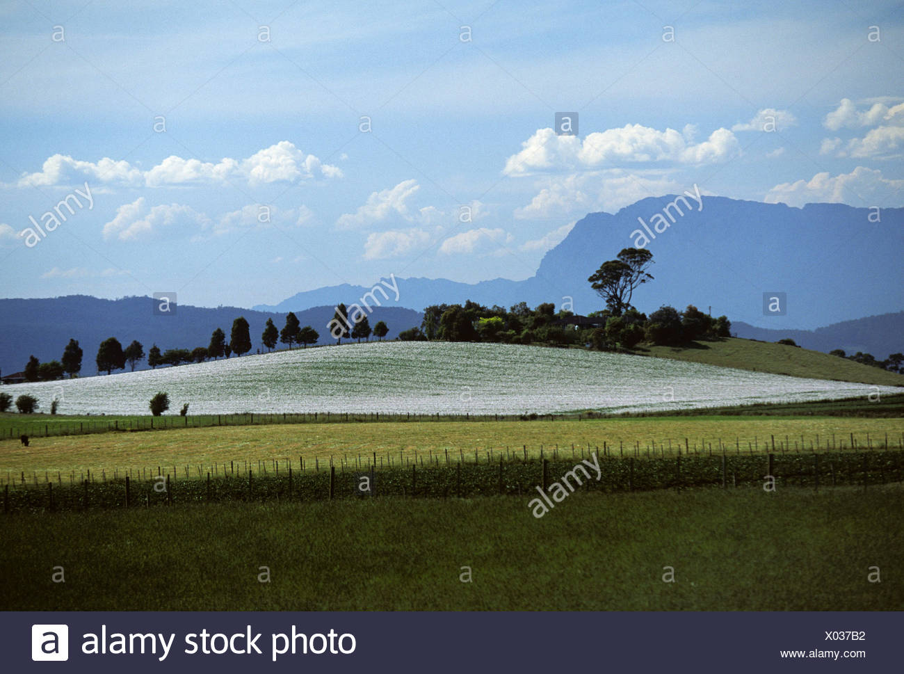 Landscape near Davenport, Tasmania, Australia - Stock Image