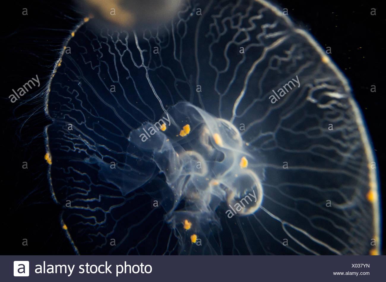 Jellyfish Swimming In Undersea Stock Photo