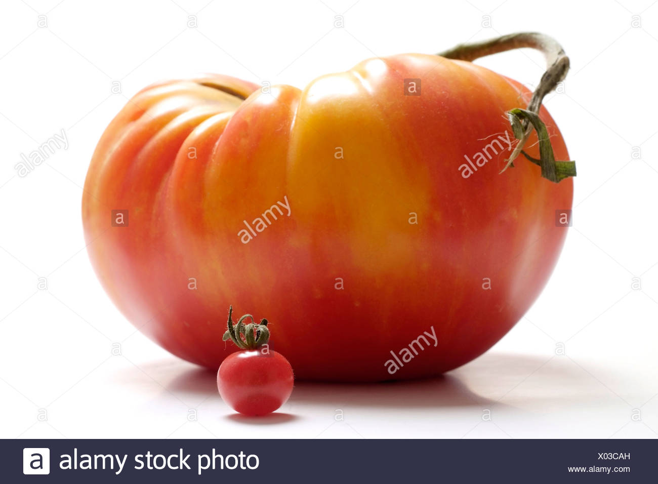 Tomatoes in different sizes - Stock Image