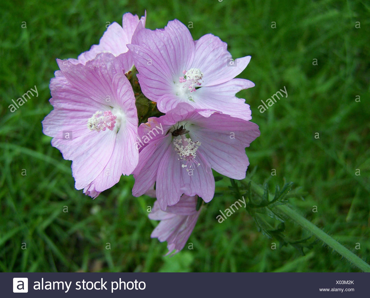 insect flower plant bloom blossom flourish flourishing flora botany fly meadow Stock Photo