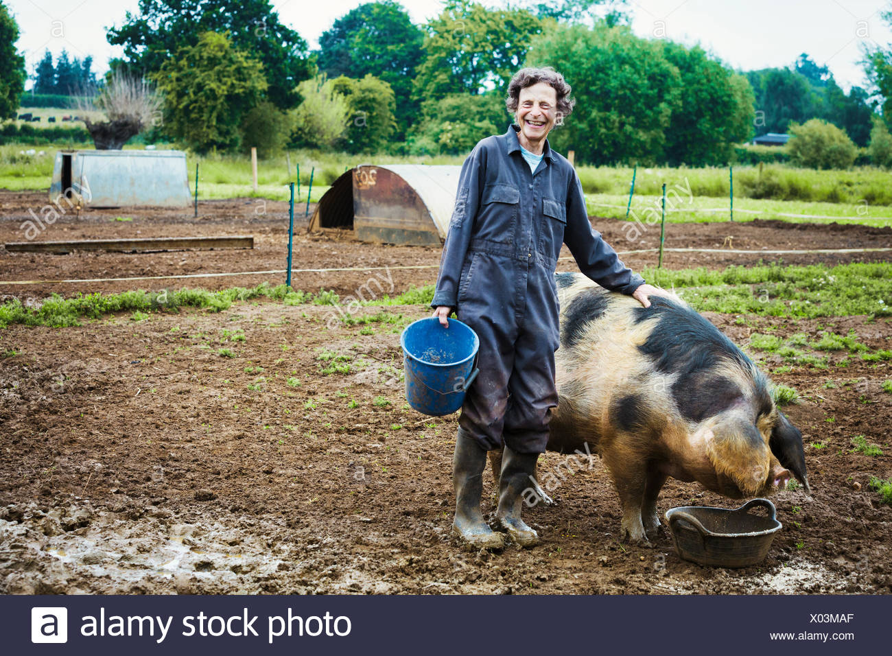 A woman stood by a large pig holding a bucket. - Stock Image