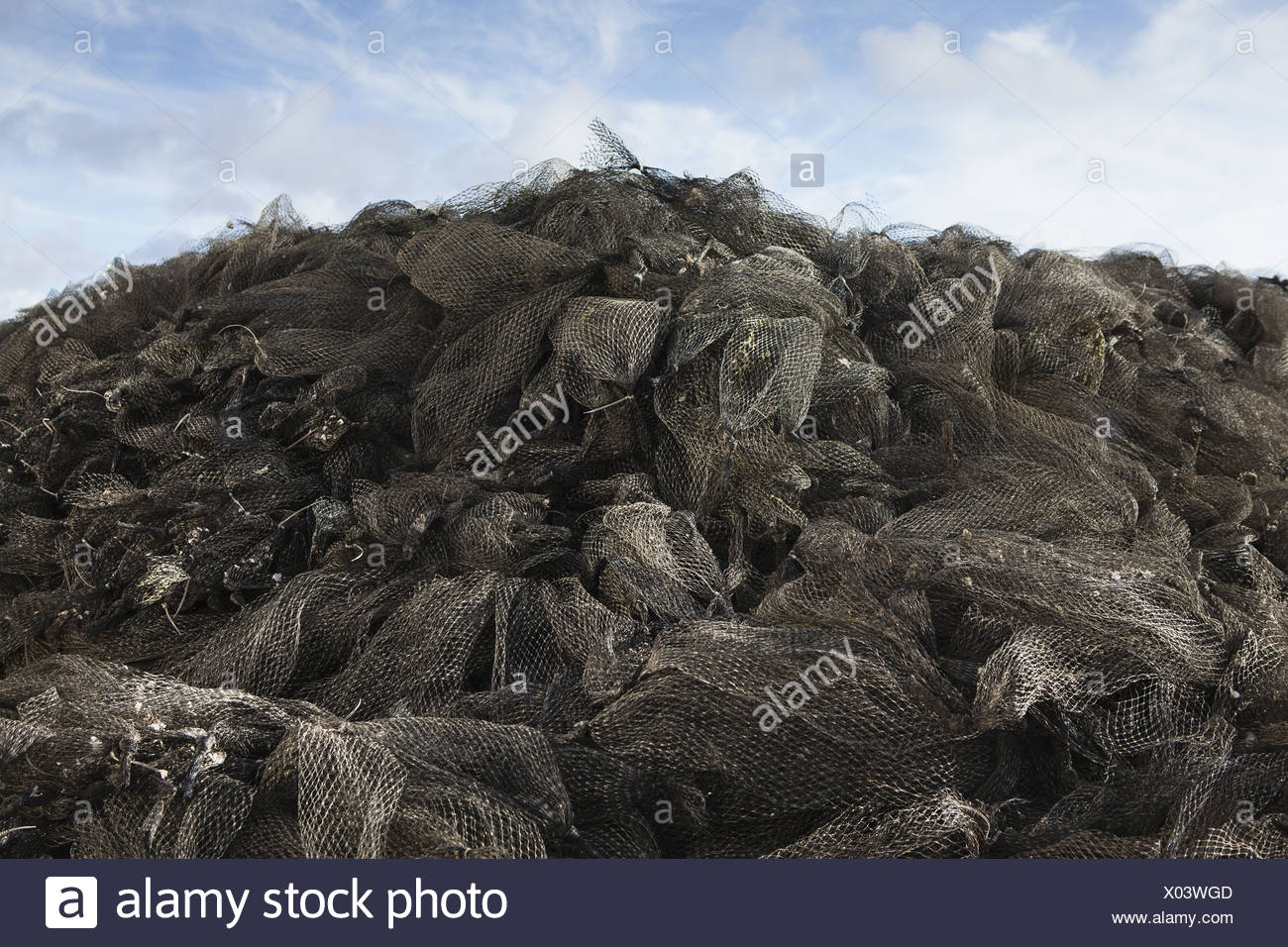 Oysterville Washington USA Nets used for shellfish aquaculture in oyster beds - Stock Image