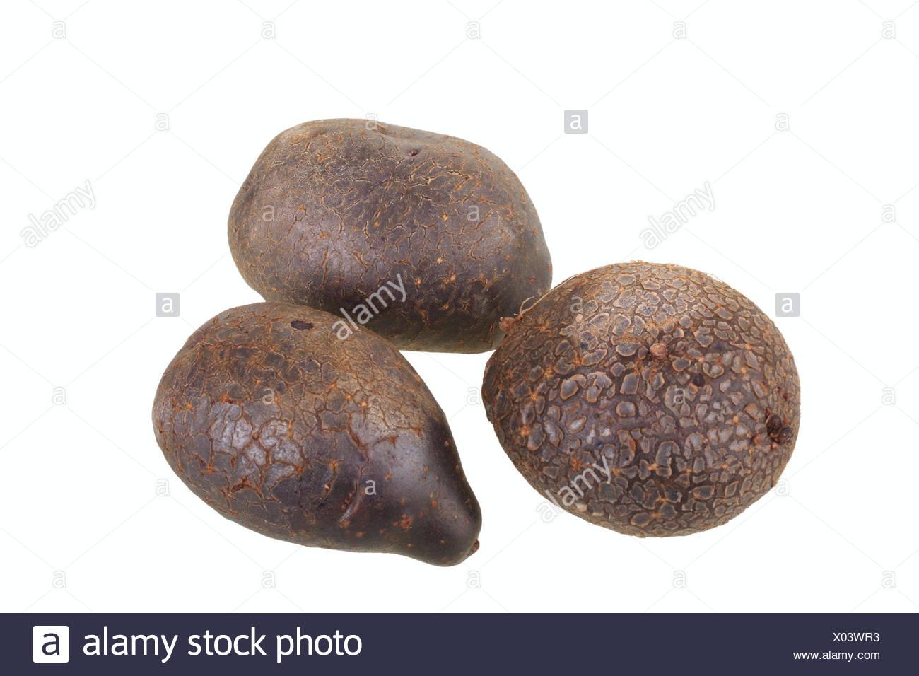 Potatoes, 'Blaue Anneliese' variety - Stock Image