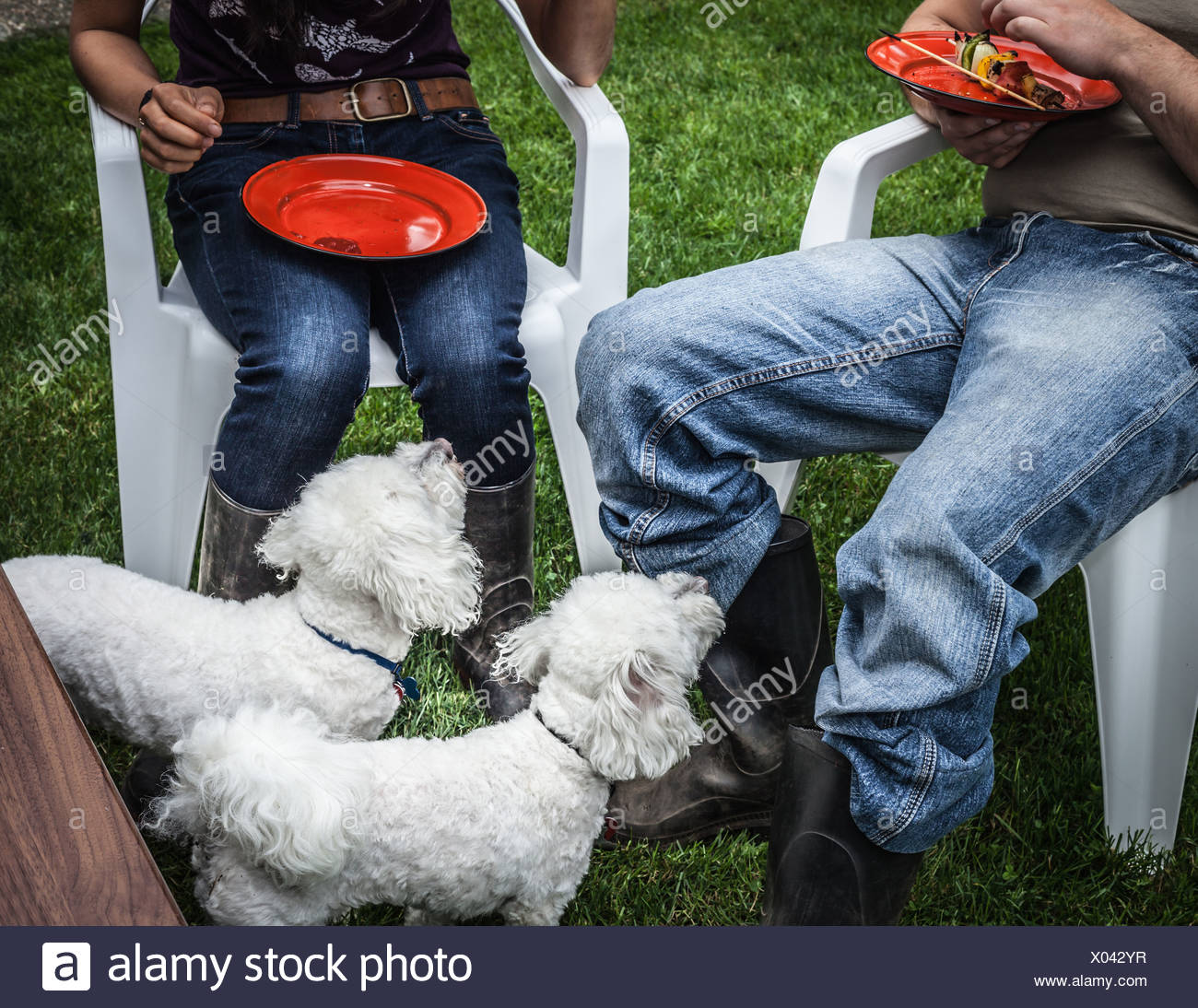Dogs begging for owners food - Stock Image