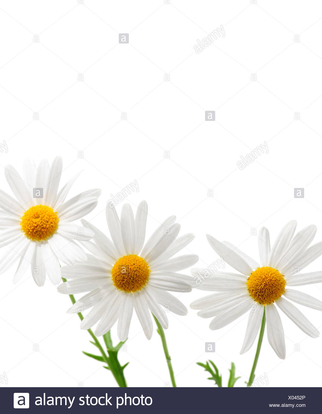 Parts flowers daisies stock photos parts flowers daisies stock flower plant flowers stock image izmirmasajfo