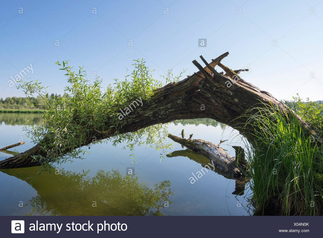 Germany Bavaria Pupplinger Au Icking Reservoir at sar floodplains - Stock Image