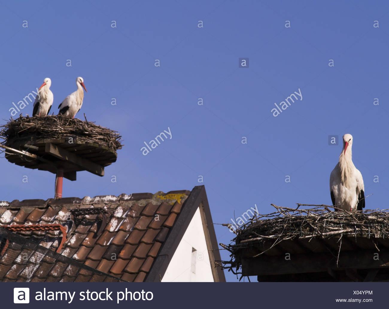 stork nests Stock Photo