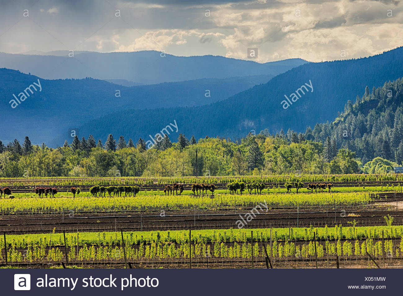 Advance Orchards near Grand Forks, British Columbia, Canada - Stock Image