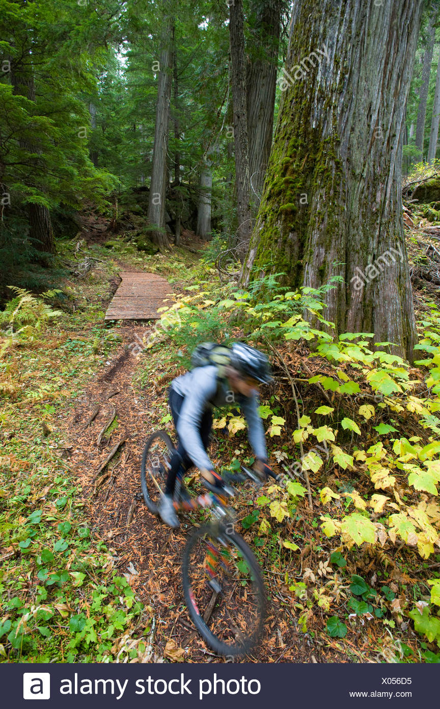 A man is a blur as he mountain bikes the lush, green forest of northern Idaho. (motion blur) - Stock Image