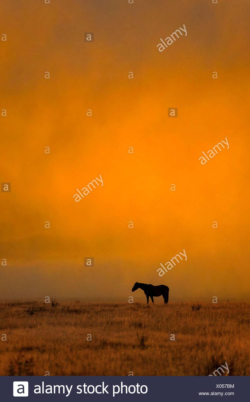 Horse, horses, Grand Teton, National Park, Wyoming, USA, United States, America, free, animal, landscape, prairie, sunset Stock Photo