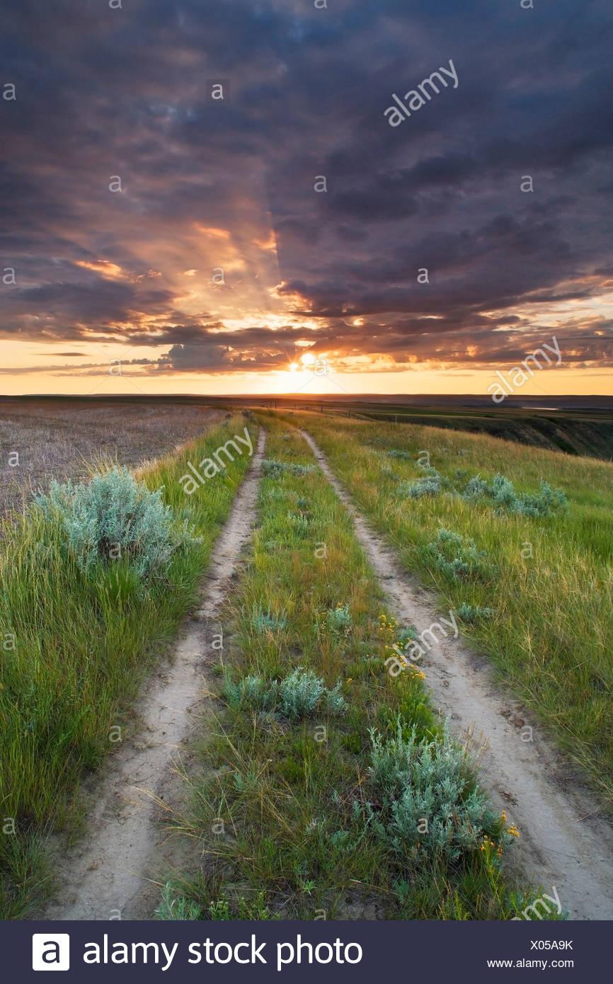 Rural road and sunrise in pasture along the South Saskatchewan River near Leader, Saskatchewan, Canada Stock Photo