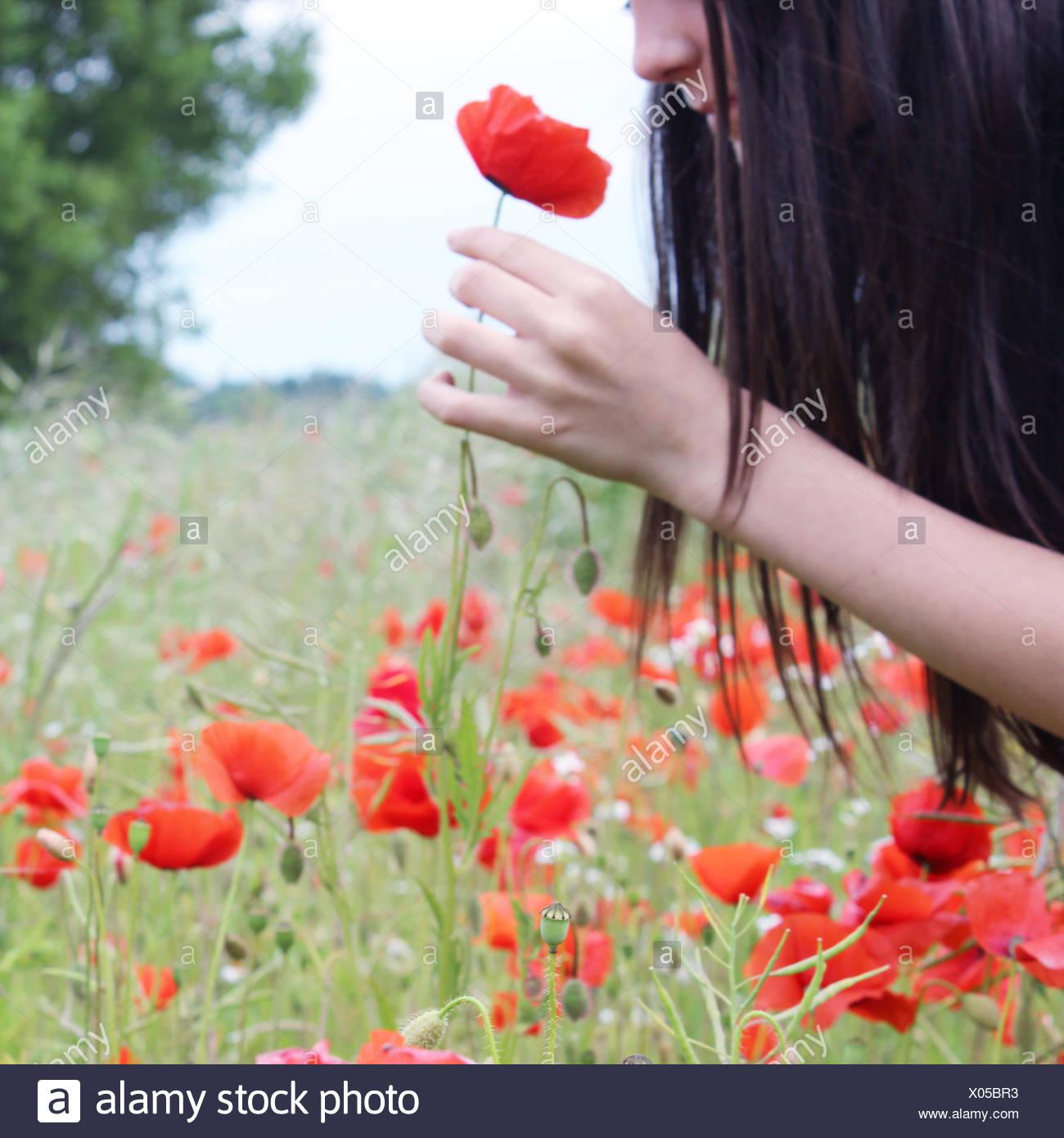 Girl smelling poppy flower - Stock Image