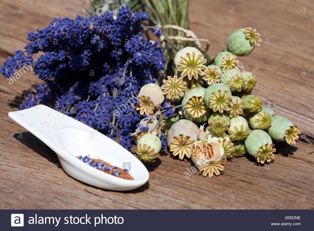 Sommerernte von Lavendelblüten, Schlafmonkapseln und Mohnsamen in einer kleinen Porzellanschale auf einem rustikalem Holztisch - Stock Image