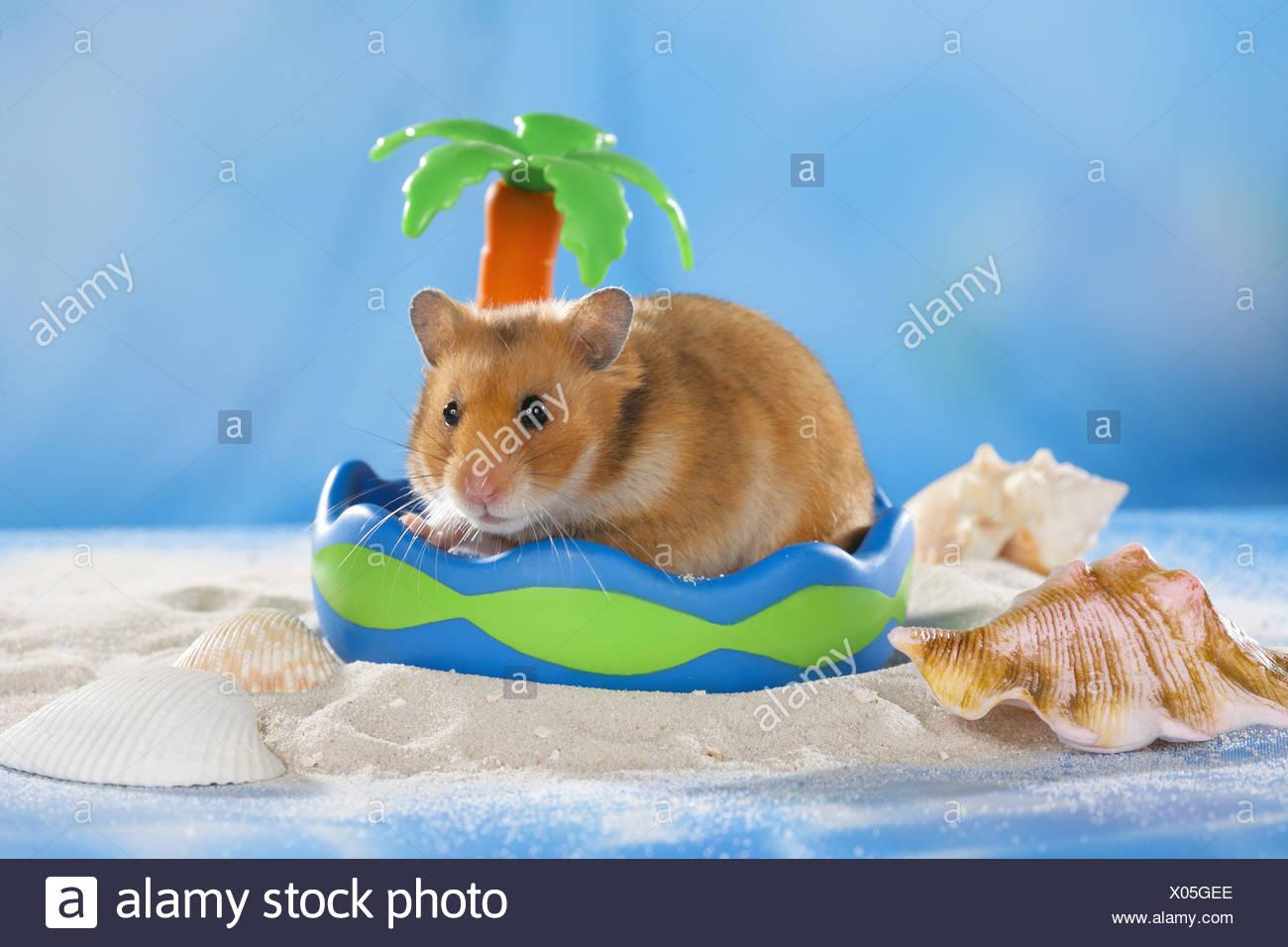 Hamster beach