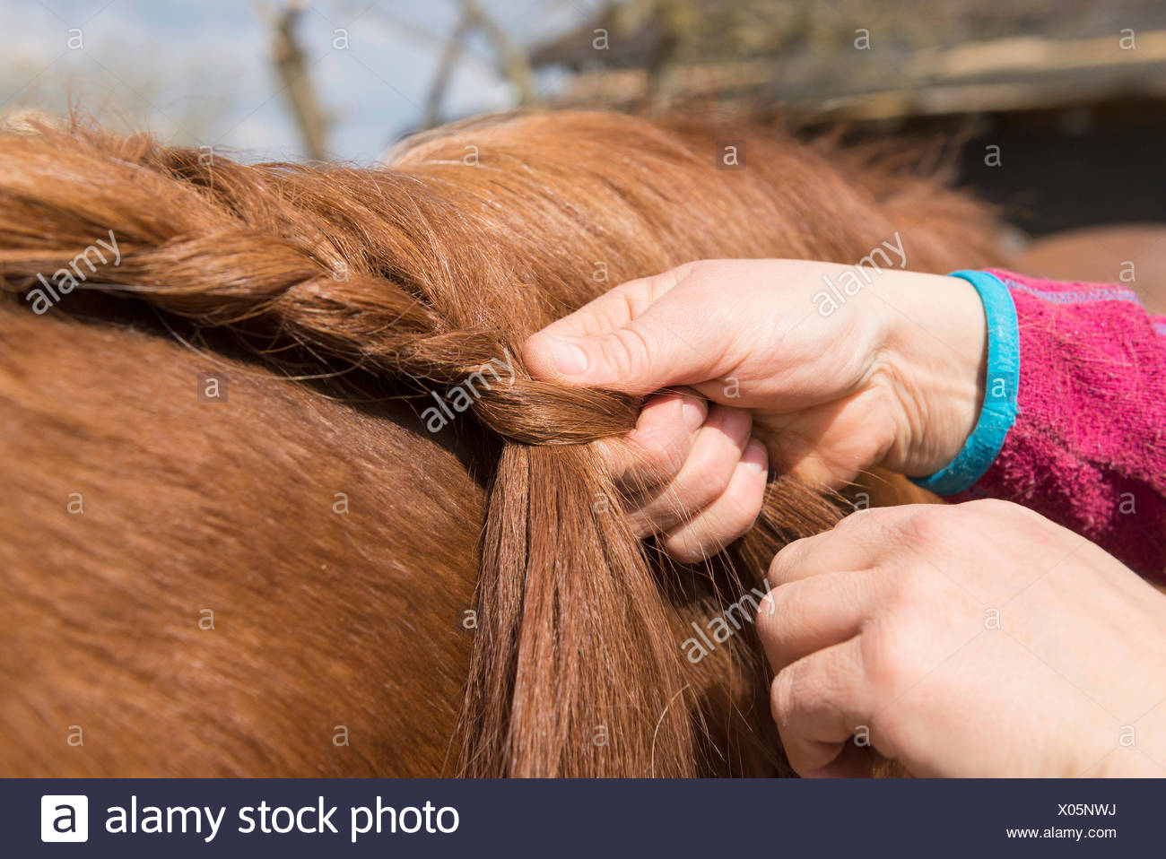 Woman's hands making braids of horse hair Bavaria Germany - Stock Image