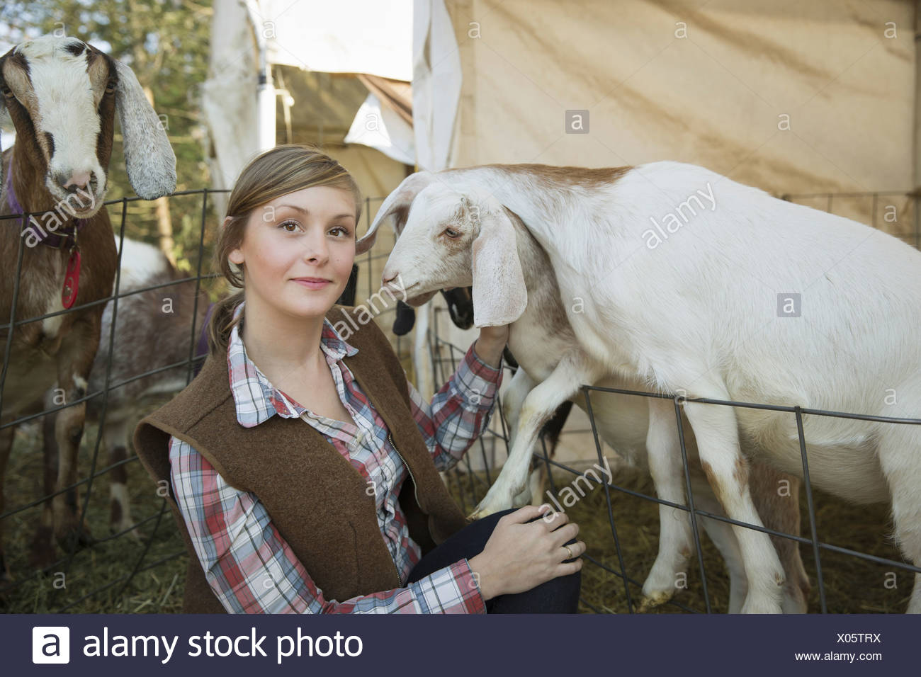 Goats in a pen leaning over the fences at a farm A young woman tickling the chin of a white goat - Stock Image