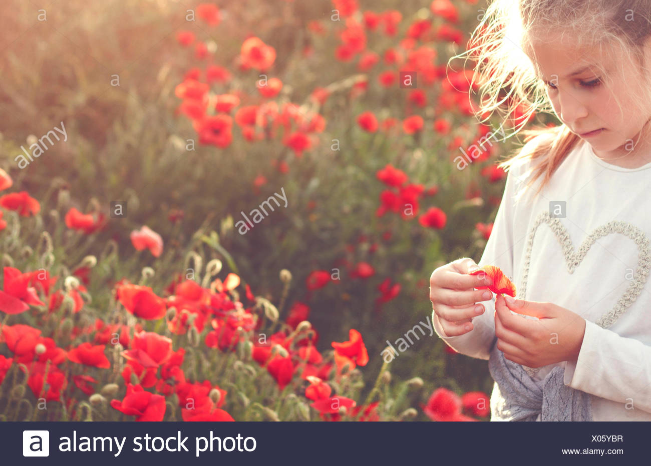 Girl standing in a field of poppies holding a poppy - Stock Image