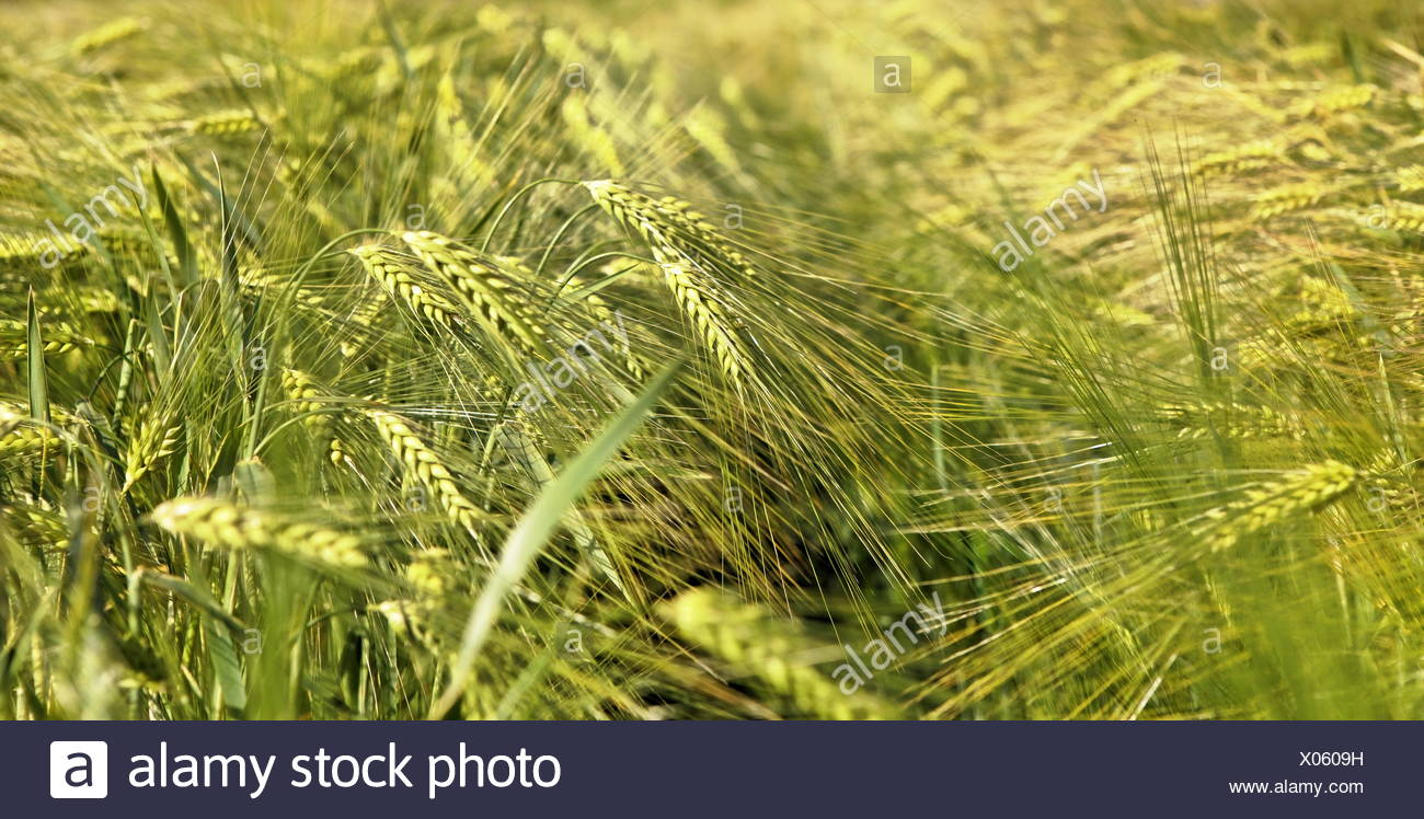 green pano - Stock Image
