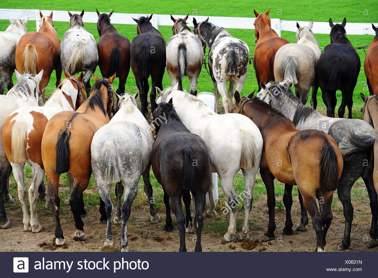 Jesus Maria, Argentina, horses are tied up side by side - Stock Image