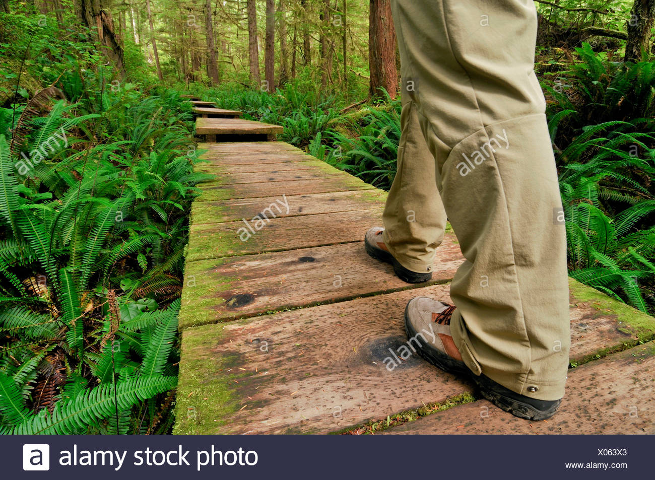 Legs of a hiker on path made of wooden planks, leading through the rainforest to Sand Point, Olympic National Park, Washington - Stock Image
