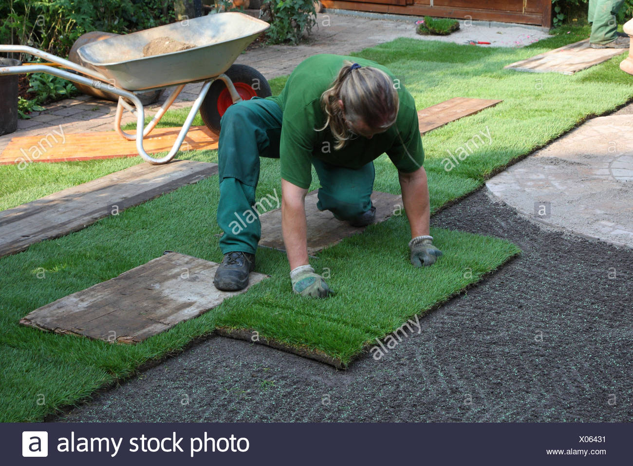 Invest of a rolling turf in the garden, - Stock Image
