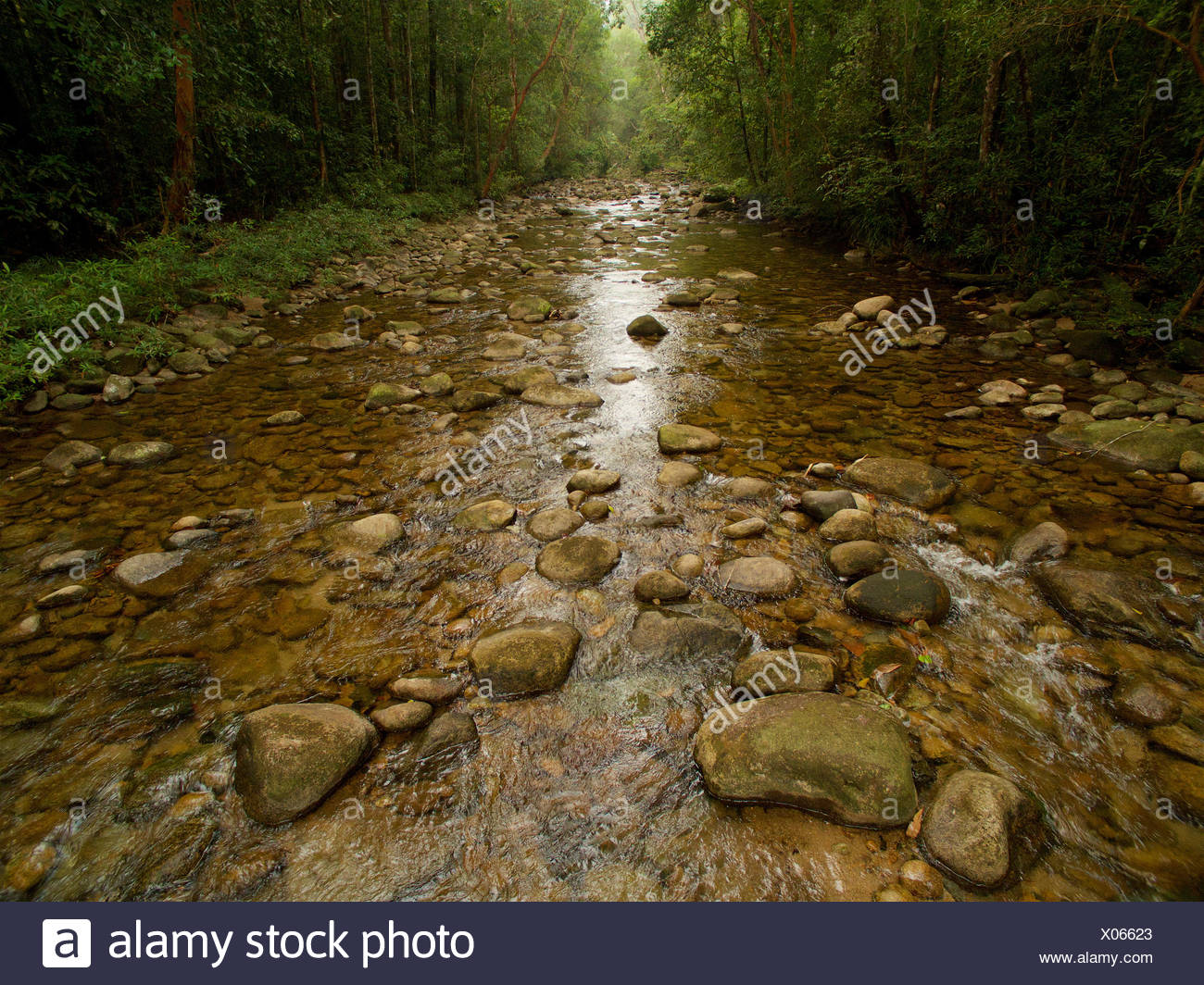 Air Putih river passing through lowland rain forest. - Stock Image