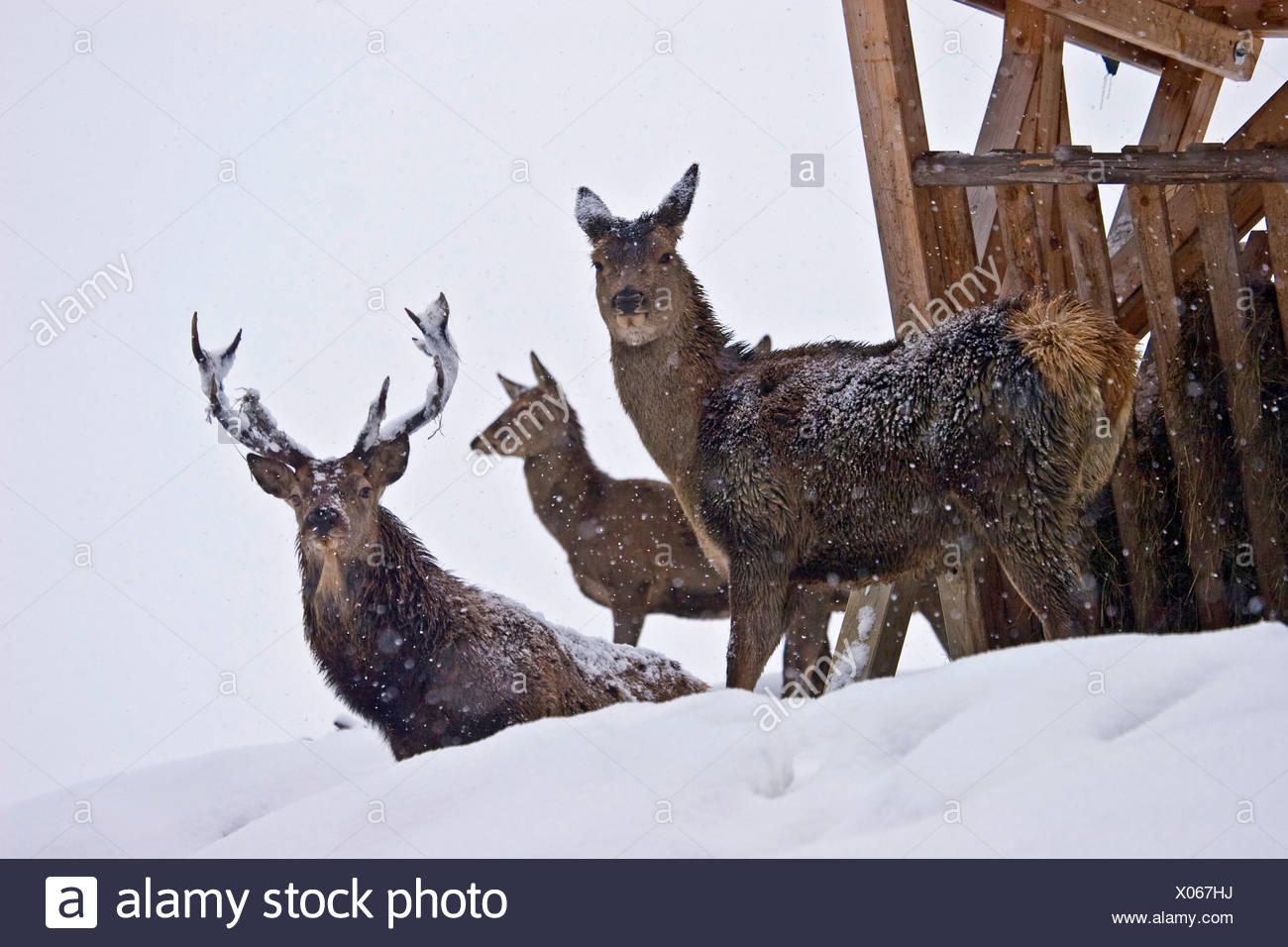 wildfutterung Stock Photo