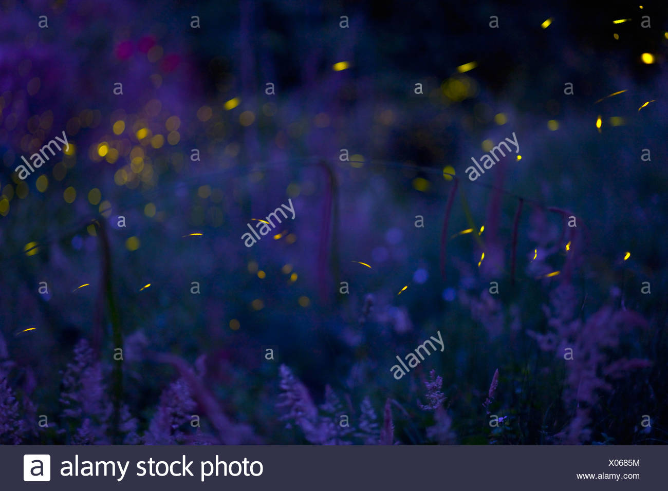 Italy, Tuscany, View of fireflies in meadow at night - Stock Image