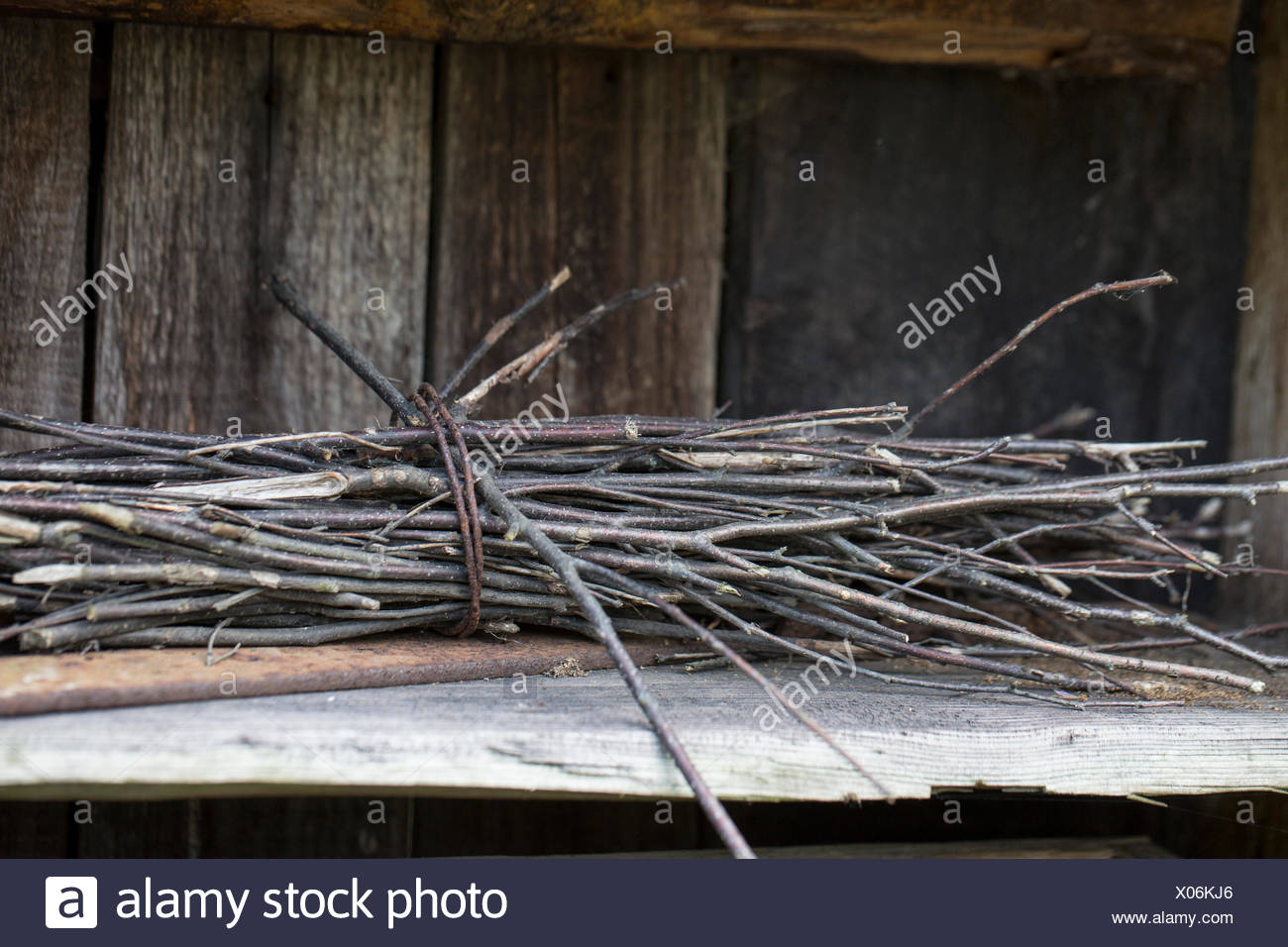 Brushwood tract on old wooden springboard - Stock Image