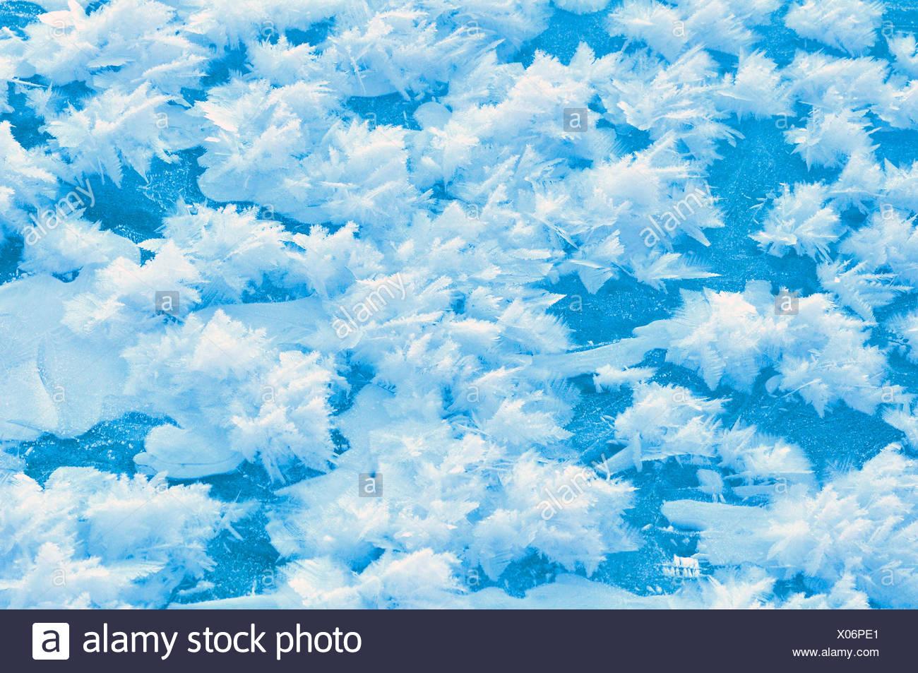 ice crystals, Sweden, Lapland, Norrbotten, Abisko National Park - Stock Image