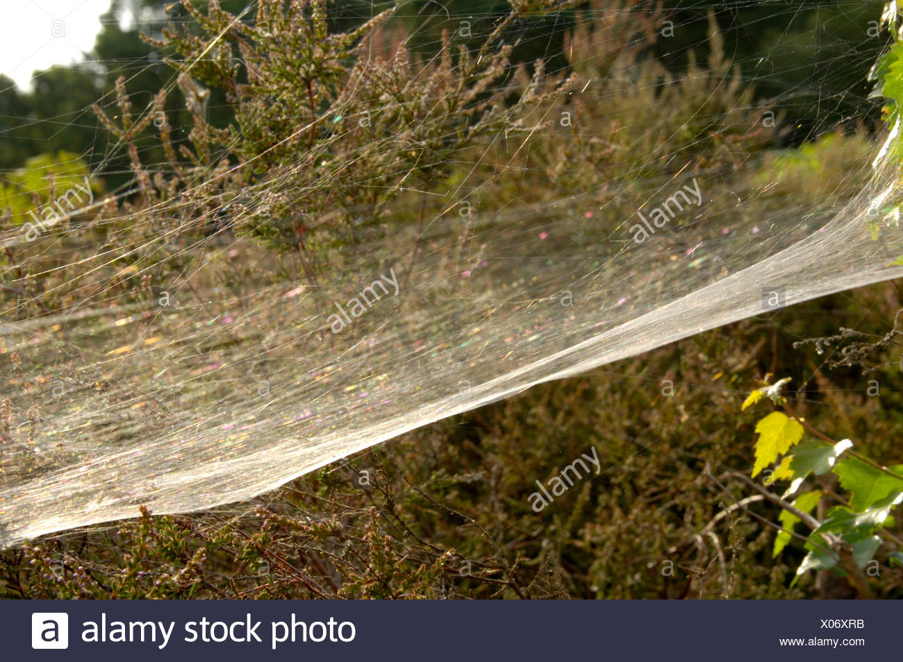 Spider's Web - Stock Image