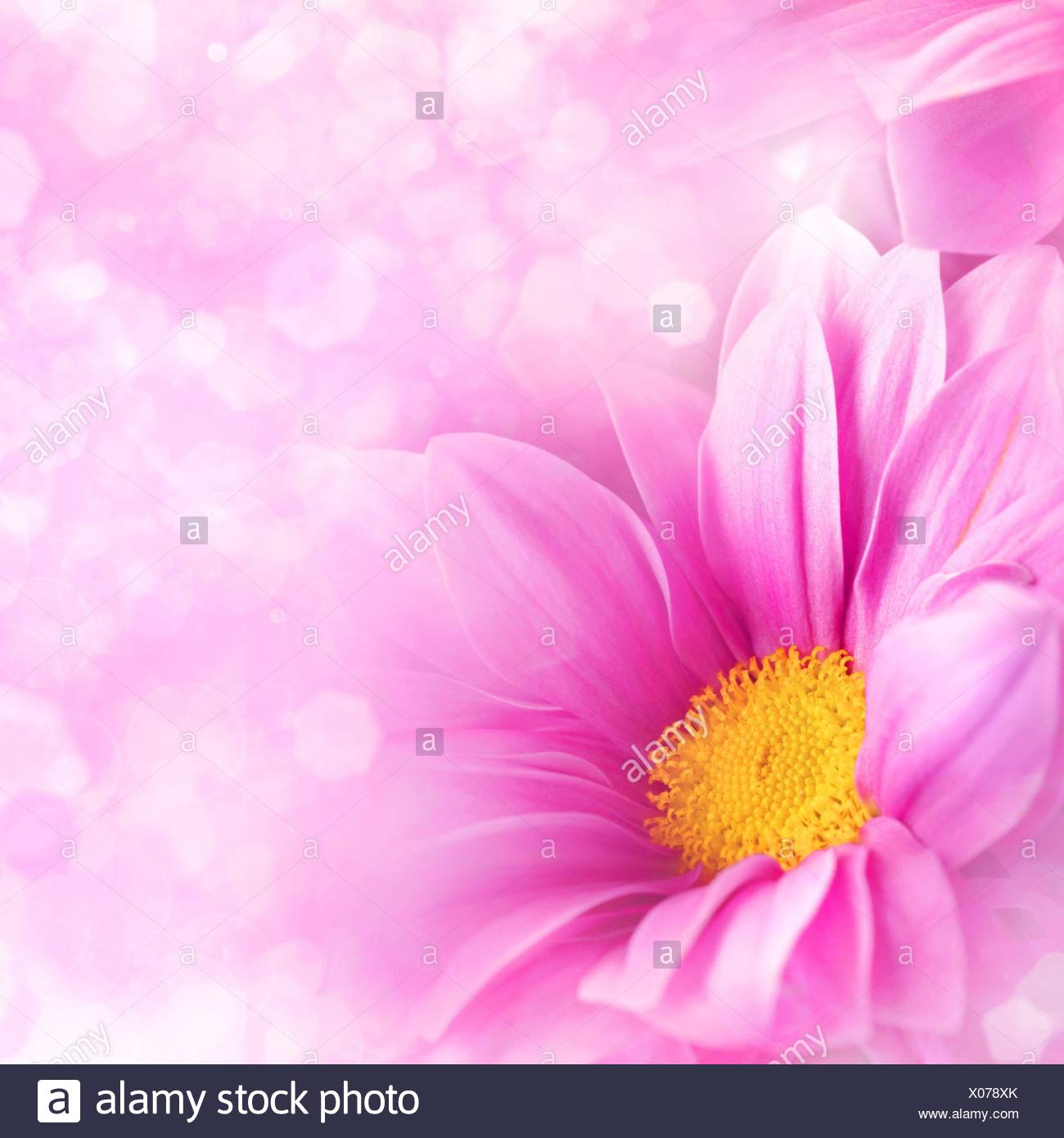 Abstract Floral Backgrounds For Your Design Stock Photo 275526571