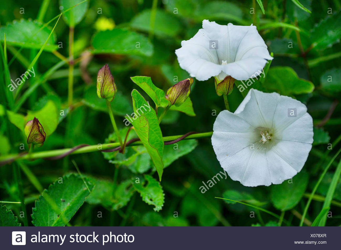 weißer zaun stock photos & weißer zaun stock images - alamy