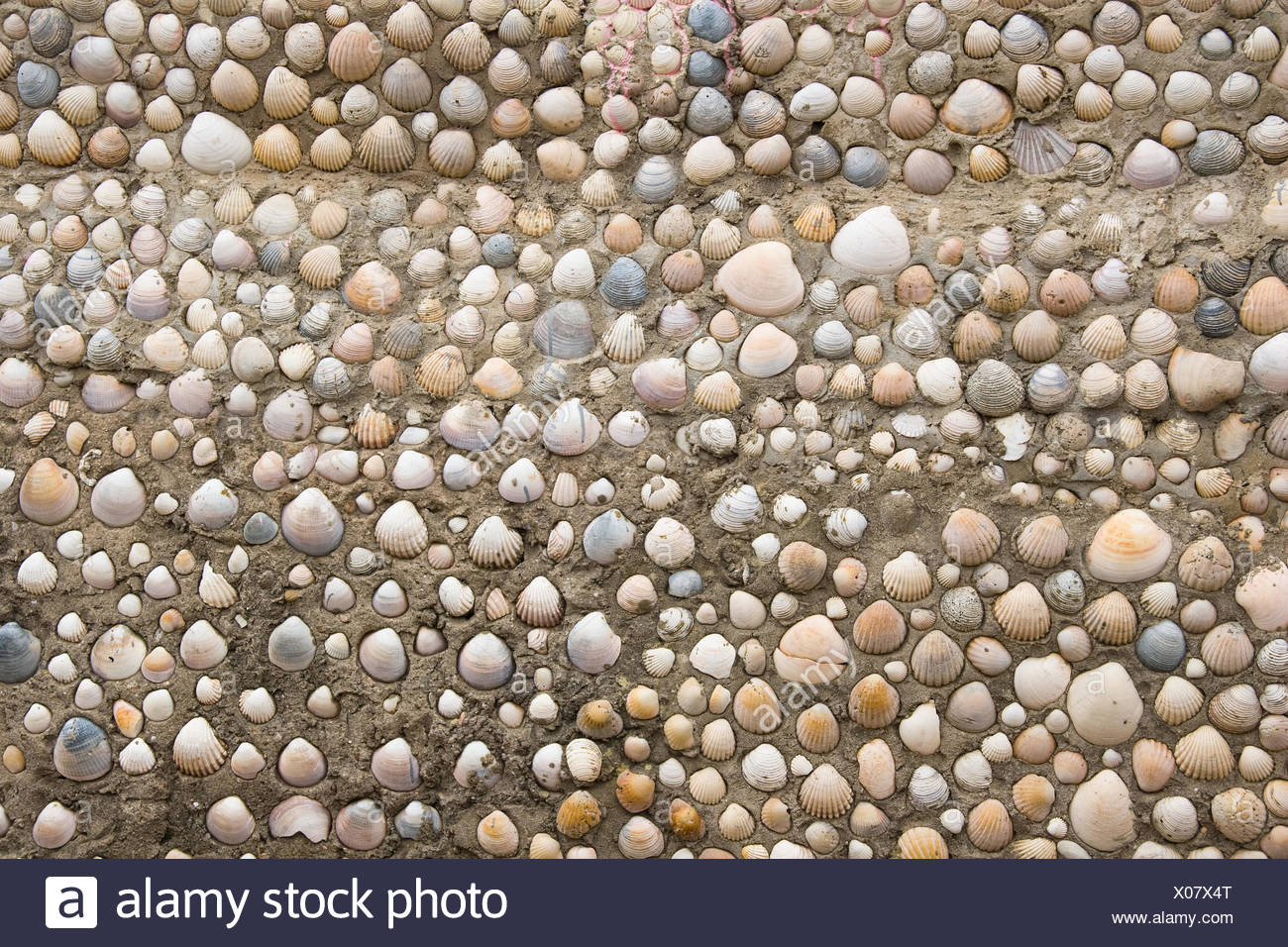 arrangement, object, colour, stone, shell, look, glancing, see, view, looking, - Stock Image