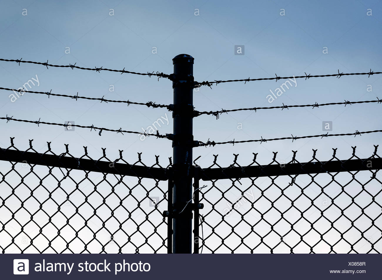 Barbed wire fence. Stock Photo