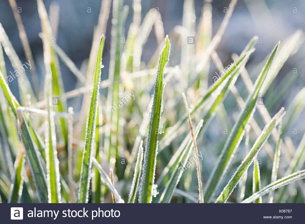 Frost covering grass - Stock Image