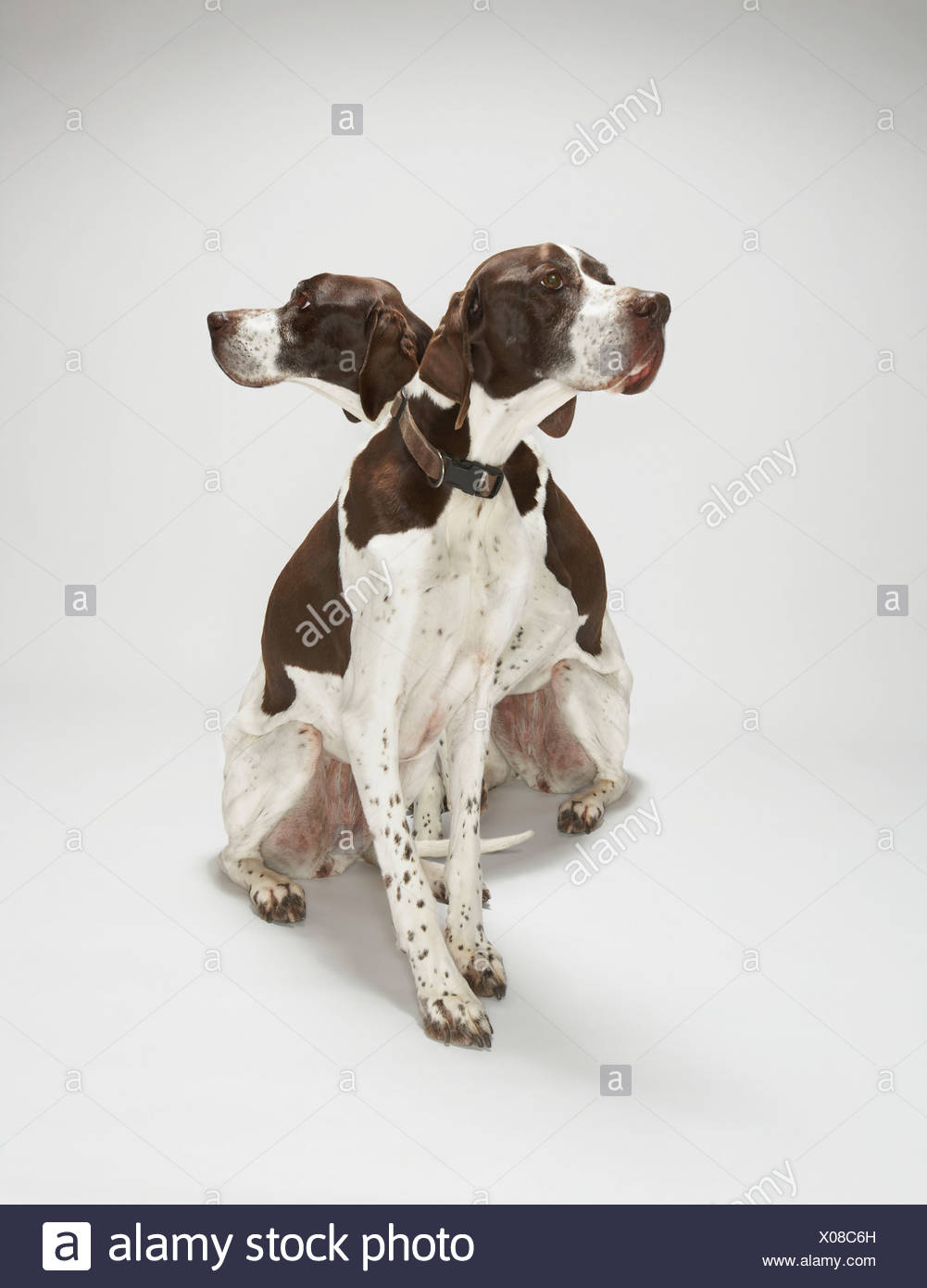 Pointers looking in opposite directions - Stock Image