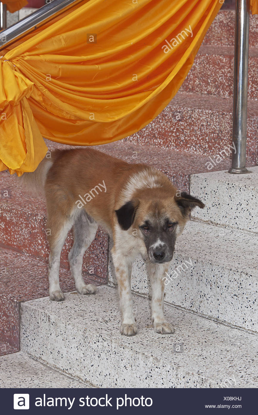 Dog temple Stock Photo