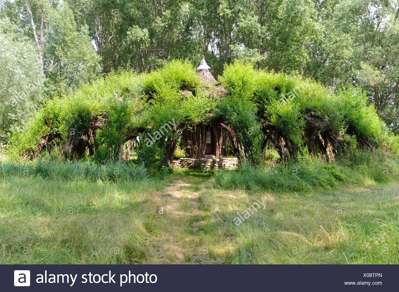 Auerworldpalast, pastures, rods, palace, Marcel Kalberer, Auerstedt, Thuringia, Germany, Europe, pastures, willows, Salix, roof, - Stock Image
