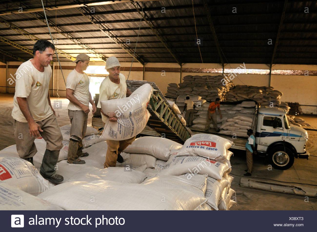 Unloading sacks of grain in a warehouse, Uberlandia, Minas Gerais, Brazil, South America - Stock Image